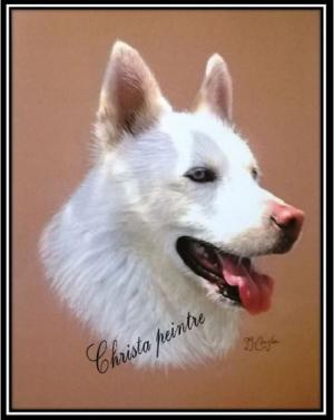 Berger blanc chien 1