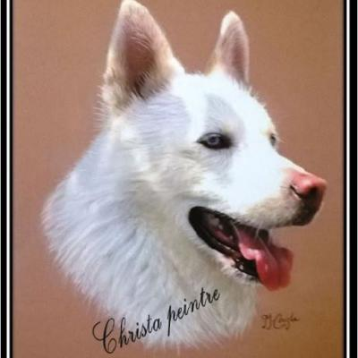 Berger blanc chien