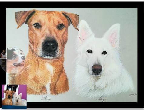 Berger blanc et chien roux