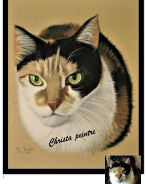 Chat 3 couleurs