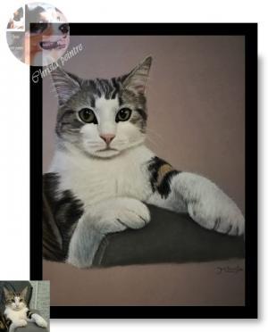 Chat dans canape