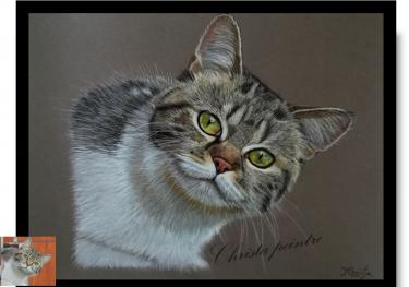 Chat yeux vert