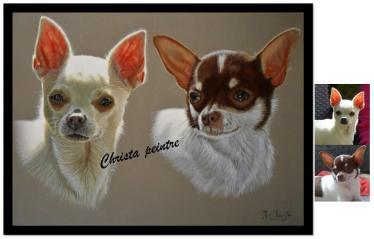 Deux chihuahuas
