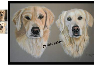 Deux golden retrievers