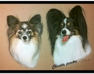 Deux loulous chien
