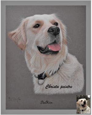 Labrador chien 2