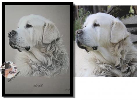 Labrador tableau de christa 1