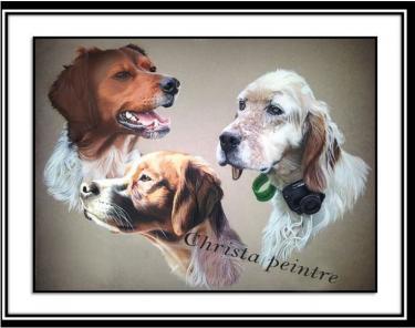 Portraits chien 12 1
