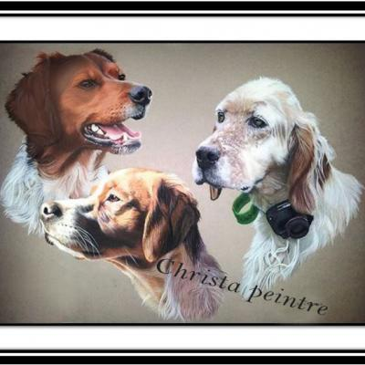 Portraits chien 12