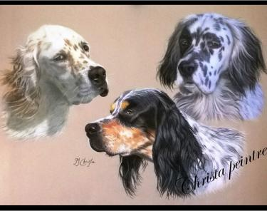 Portraits chien 13 1