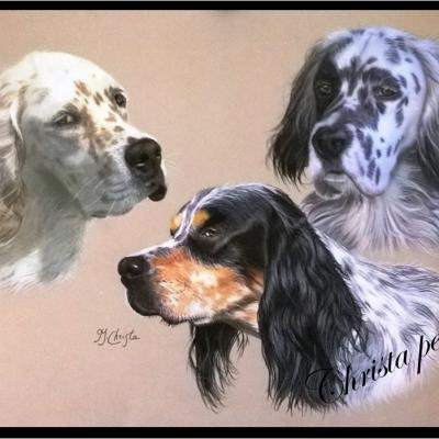 Portraits chien 13