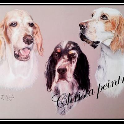 Portraits chiens setter