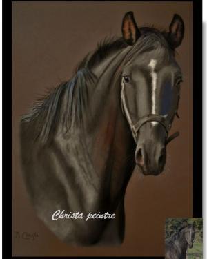 Tete de cheval 2