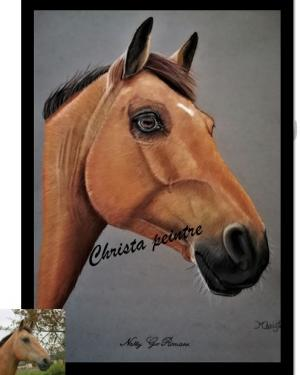 Tete de cheval6